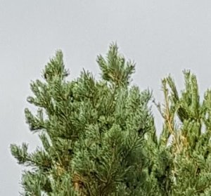 trees_s8plus.jpg