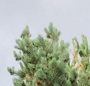 trees_iphone8plus.jpg