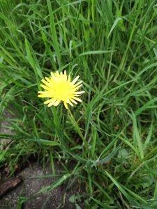 s3proflower.jpg